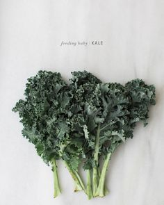 Feeding Baby Kale - lots of unique homemade baby food recipes and ideas