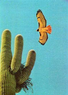 cactus with nest & desert bird Desert Dream, Desert Life, Agaves, Cacti And Succulents, Cactus Plants, Indoor Cactus, Cactus Art, Thelma Et Louise, Desert Aesthetic