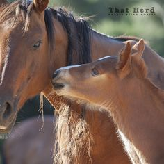 Daily Blog | That Herd | Horses Being Horses | Page 4