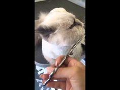 Este gato tem a reação mais engraçada de sempre ao cortar o pêlo