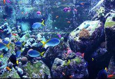 Free 3d aquarium screensaver operating system os windows 7 vista xp and older os 39 s - Fish tank screensaver pc free ...