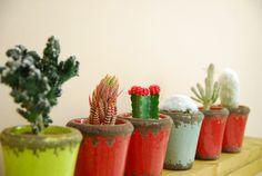 six cactus