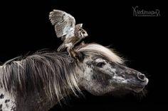 Gandalf, Horse Head, Tiger, Horse Breeds, Beautiful Horses, Pretty Face, Instagram Posts, Animals, Baroque