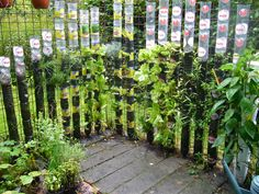 """Bottle tower gardening: how to start ? (Willem Van Cotthem)  Together with my friend Gilbert VAN DAMME (Zaffelare, Belgium) I have set up some successful experiments with vertical gardening in """"container towers""""."""