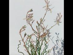 Trachyandra jacquinii seen in habitat Serpentina, Rare Species, Habitats, Seen, Shapes, Plant