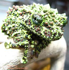 Mossy Face King Frog.
