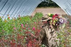 Image result for real flower company margaret merril Flower Company, Real Flowers, Plants, Image, Plant, Planting, Planets