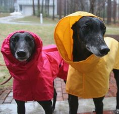 Rooin' in the Rain Coat for Dogs. <3 Greyhounds... With silver on their nosies. <3