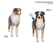 Blue Ancolia - (requested by Australian Shepherd Sims 4 Game Mods, Sims 4 Mods, Sims 4 Pets Mod, Pet Dogs, Dog Cat, Sims 4 Family, Sims 4 Gameplay, Sims 4 Characters, Australian Shepherd Dogs