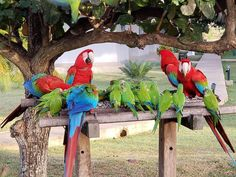 Travel agency specialized in tailor made tour off beaten path in Brazil and along the Route of Emotion from Sao luis to Jericoacoara, lencois maranhenses. Green Wing Macaw, Conure, Travel Agency, Cute Animals, The Incredibles, Birds, Parrots, Awesome, Sweets