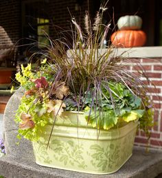 Fall container garden  A repurposed wash bin, painted and stenciled, offers plenty of growing space for plants. This grouping includes purple fountaingrass (Pennisetum setaceum), ornamental cabbage, coralbells (Heuchera), and creeping Jenny (Lysimachia nummularia).
