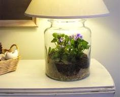 African violet lamp terrarium AWESOME!!! Use a florescent bulb and they'll bloom like mad!