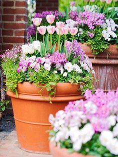 Tulips, pansies, and toadflax in shades of pink and white blend in this cool-season container garden. 'White Emperor' tulip is also known as 'Purissima'. Double-flowered 'Angelique' tulip evokes apple blossoms with its two-tone pink-and-white blooms. Garden Bulbs, Planting Bulbs, Garden Pots, Planting Flowers, Fruit Garden, Container Plants, Container Gardening, Pot Jardin, Decoration Plante