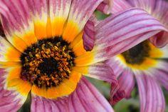 Flowers From My Garden #44