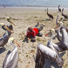 """""""Surrounded"""" !! Peruvian man feeding the #Pelicans in Paracas, Peru. Paracas National Reserve is a popular travel destination on the southern coast of #Peru. Photo by Mike Theiss. #Padgram"""