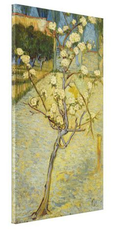 Small Pear Tree in Blossom by Vincent Van Gogh Stretched Canvas Prints. #VanGogh