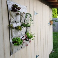 My new succulent garden using an old shoe organizer, super easy and fun!