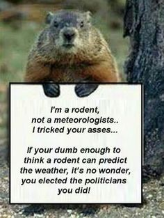 I Am A Rodent Not A Meteorologist Funny Groundhog Day Quote february 2 groundhog day quotes groundhog phil groundhogs day groundhogs day quotes groundhog day happy groundhogs day happy groundhog day quotes Funny Animal Memes, Funny Animals, Funny Quotes, Wild Animals, Funny Memes, Cold Weather Funny, Weather Quotes, Happy Groundhog Day, Funny Facebook Status