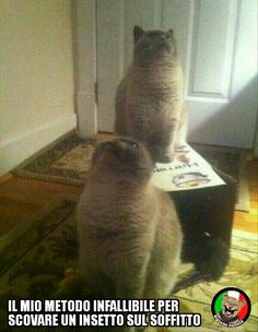 http://www.vignetteitaliane.it #vignette #immagini #divertenti #italiano #lol #funny #pictures #italian #cats #gatti #bugs #insetti