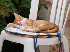 Cats in Crete - a look beyond and behind these iconic images of Greece Orange Cats, White Cats, I Love Cats, Cool Cats, Ginger Kitten, Amor Animal, Types Of Cats, Tiny Kitten, Super Cute Animals
