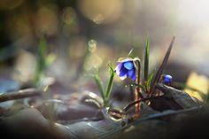 Small purple flowers, dry leaf, bokeh wallpaper
