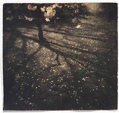 """Masao Yamamoto """"La lampe éteinte les étoiles fraîches se glissent par la fenêtre"""" Sôseki"""