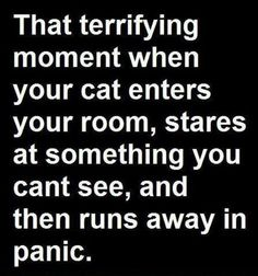 My cat does that all the time...