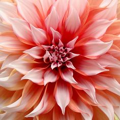 Dahlia. One of my absolute favs along with peonies