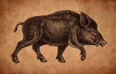 Saehrimnir. The wild boar that is killed and eaten every night by the gods and einherjar in Norse mythology. Slaughtered and prepared by Andhrimnir, the cook of the gods. Each day after Saehrimnir is eaten he comes back to life and so he can be killed and eaten again.