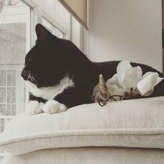 Ook Kitty vindt het hondenweer #regen #rain #kat #poes #home #window #living #home #koesfabriek #zwartwit #blackandwhite