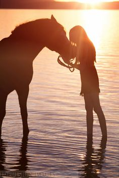horse in water sunset LOVE THIS PICTURE!!!!!!!!!