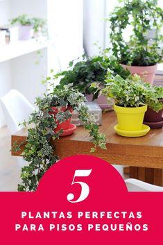 Te mostramos cuáles son las plantas más recomendadas para apartamentos pequeños. Table Decorations, Plants, Furniture, Home Decor, Climber Plants, Growing Plants, Small Apartments, Flats, Apartment Living