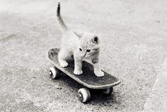 Skateboarding kitten :) board for j, kitten for lane!
