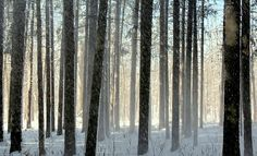 Frosty Mist in the forest on a winter's day hike.