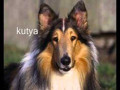 Ismerkedjünk az állatokkal! (magyarul) - YouTube