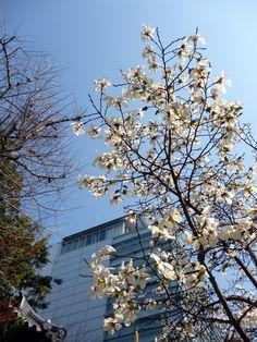 Spring has come in Tenjin, Fukuoka. (2012/03/27) #1