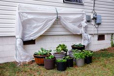 When frost is in the forecast, be ready to protect your veggies so you can enjoy their fresh flavors a little longer. Click on for instructions from Bonnie Plants on how to build this DIY fold-down greenhouse.