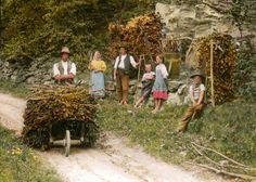 Wachauer Winzer bei der Herbstarbeit, © IMAGNO/Öst. Volkshochschularchiv