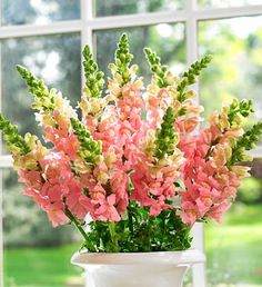 Peachy snapdragons! wedding bouquet but in yellow! these would work well with the wheat tall arrangements for ceremony