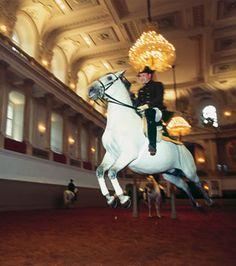 Lipizzaner Horses, Vienna, Austria