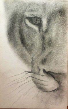 Lioness sketch lion art