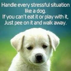 Stressful situations..