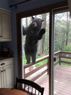 Magical screen door ensuring our safety from bears that love our fruit trees...