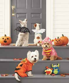 Pet Safety Tips for Halloween... basic dos and don'ts to ensure a frightfully fun night for all! #marthastewartpets