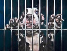 Animal Shelter Portraits  by Mark Ross