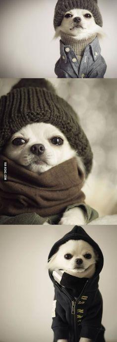 Thug life Chihuahua