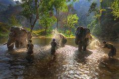 Elephant bath time in Mae Chaem, Thailand (Photo: Ekkachai Pholrojpanya/Moment/Getty Images) http://yhoo.it/1u2raXe