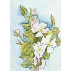 Beautiful drawing by Maria Nikolaevna.  #romanov #imperial #russian #history #tsar #grandduchesses #otma #drawing #by #marianikolaevna #maria #mashka #beautiful #flowers #russianroyalty by otmadiary