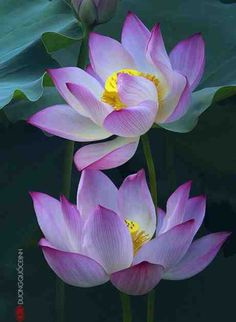 Love this color, the Lotus Flower my guess!
