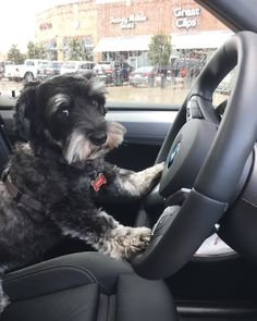 Don't say anything, hurry up and get in the car